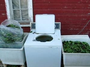 washing machine used to wash vegetables